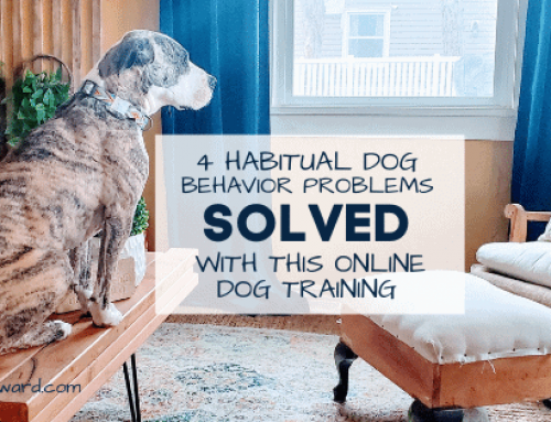 4 Habitual Dog Behavior Problems Solved with this Online Dog Training